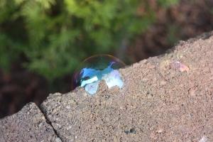 Butterfly bubble