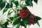 Photo01_1